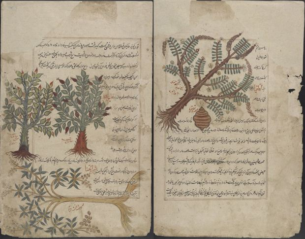 A 16th century Persian manuscript documenting plants and their medicinal qualities. Via Wikimedia Commons.
