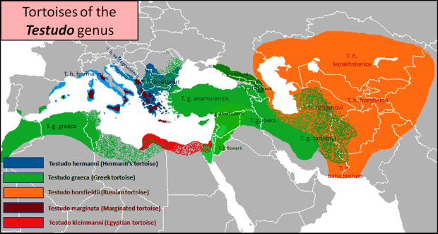 Distribution of Testudo graeca subspecies and other tortoises in the genus Testudo. Map: Abu Shawka (Own work) [CC-BY-SA-3.0 (http://creativecommons.org/licenses/by-sa/3.0)], via Wikimedia Commons